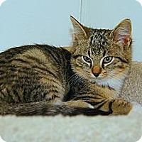 Adopt A Pet :: Maya - Victor, NY
