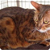 Adopt A Pet :: Osiris - Beverly Hills, CA
