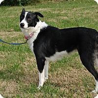Adopt A Pet :: Veda - Bedminster, NJ