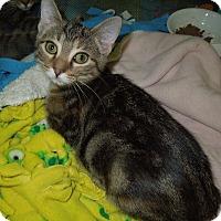 Adopt A Pet :: Marble - Medina, OH