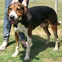 Adopt A Pet :: Victor - Seguin, TX
