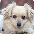 Adopt A Pet :: Pippa