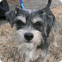 Adopt A Pet :: Stevie - Laurel, MD