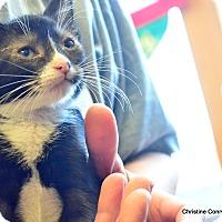 Adopt A Pet :: Dim Sum - Island Park, NY