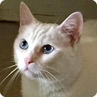 Adopt A Pet :: Hannah - Buford, GA