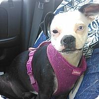 Adopt A Pet :: Trinity - Cumberland, MD