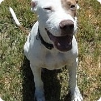 Adopt A Pet :: Alex - Bedford, TX