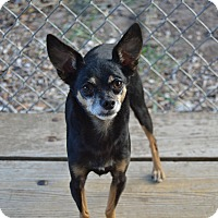 Adopt A Pet :: Blacky - Santa Barbara, CA