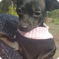 Adopt A Pet :: Pia - San Francisco, CA