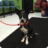 Adopt A Pet :: Dori - Nashville, TN