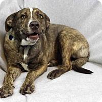 Adopt A Pet :: Zita - Westminster, CO