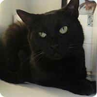 Adopt A Pet :: Dorothy - Hamburg, NY