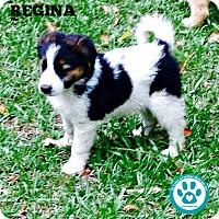 Adopt A Pet :: Regina - Kimberton, PA