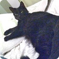 Adopt A Pet :: Geri - Mississauga, Ontario, ON