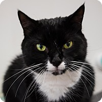 Adopt A Pet :: Mya - Acushnet, MA
