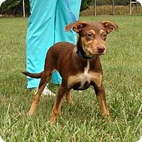 Adopt A Pet :: John $250 - Seneca, SC