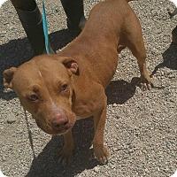 Adopt A Pet :: Bonnie - Mira Loma, CA