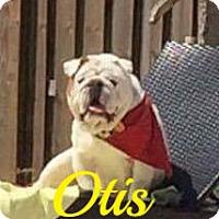 Adopt A Pet :: Otis - Maitland, FL
