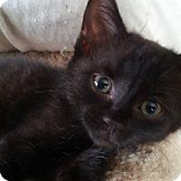Adopt A Pet :: Dijon - Flushing, MI