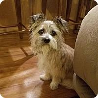 Adopt A Pet :: Bandit - DuQuoin, IL