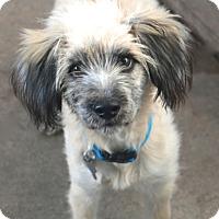 Adopt A Pet :: Wendover - MEET ME - Woonsocket, RI