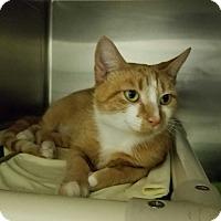 Adopt A Pet :: Tallulah - Elyria, OH