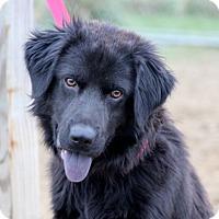 Adopt A Pet :: Mike - Liberty Center, OH