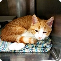 Adopt A Pet :: Fanta - Indianapolis, IN