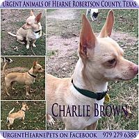 Adopt A Pet :: Charlie Brown - Hearne, TX