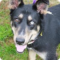 Adopt A Pet :: Rosabelle - Poughkeepsie, NY