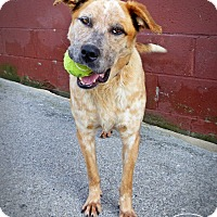 Adopt A Pet :: Jordan - Marlinton, WV