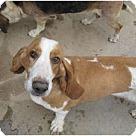 Adopt A Pet :: Jenna