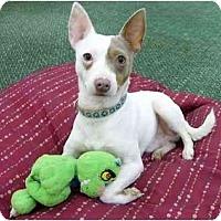 Adopt A Pet :: Rocko - Mocksville, NC