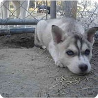 Adopt A Pet :: Tupit - Jacksonville, NC