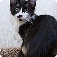 Adopt A Pet :: Jolie - Irvine, CA