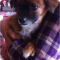 Adopt A Pet :: Yoshi - Oceanside, CA