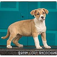 Adopt A Pet :: Macaroni - Owensboro, KY