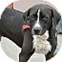 Adopt A Pet :: CHUBBS - Hagerstown, MD