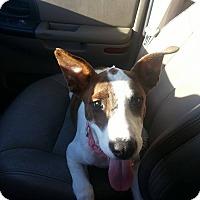 Adopt A Pet :: Kimmy - Scottsdale, AZ