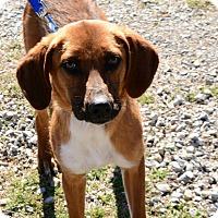 Adopt A Pet :: Benjamin OKs31 - Davis, OK