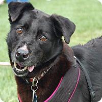 Adopt A Pet :: Maggie Mae - Charlotte, NC