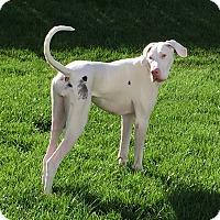 Adopt A Pet :: Marigny - O'Fallon, MO