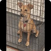 Adopt A Pet :: Henry - Albemarle, NC