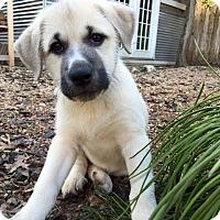 Adopt A Pet :: Roberta - Austin, TX