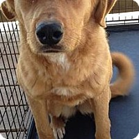 Adopt A Pet :: Bella - Quinlan, TX