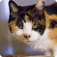 Adopt A Pet :: Auntie Em - Grayslake, IL