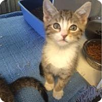 Adopt A Pet :: Edward - Camden, DE
