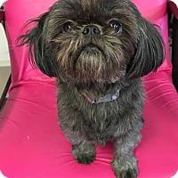 Adopt A Pet :: Raven - Fargo, ND