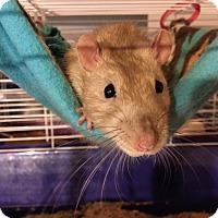 Adopt A Pet :: Otis - Rochester, NY