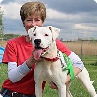 Adopt A Pet :: Piper - Elyria, OH
